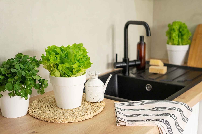 Teyo Diseños: planta perejil para cocina